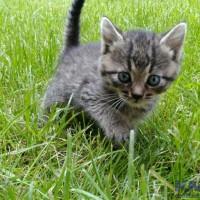 новое фото кота.jpg